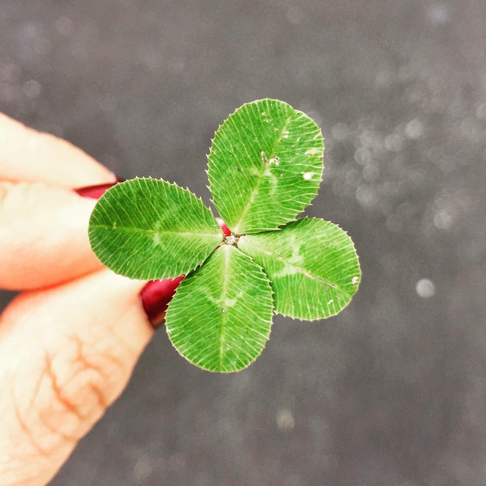 Geluksjagen Voor Pro's En 3 Tips